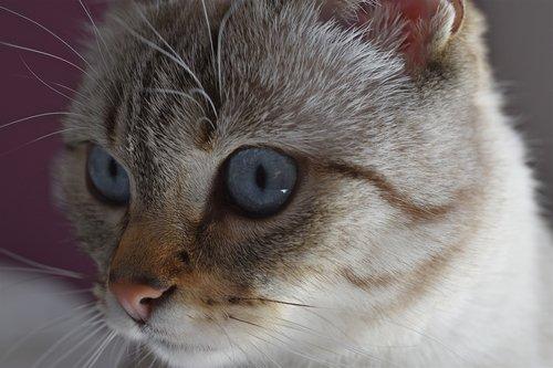 cat  look  feline