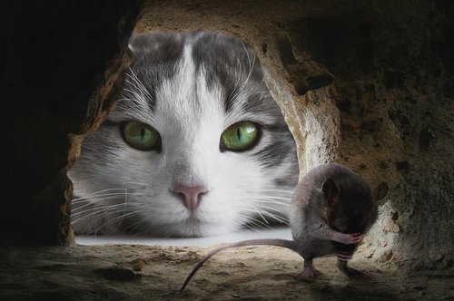 cat  mouse  hunting