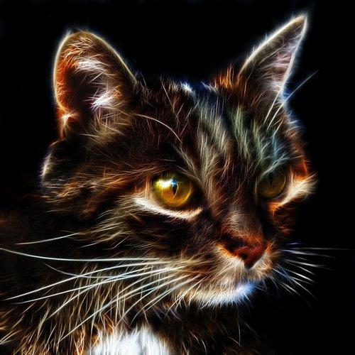cat  fractalius  profile picture
