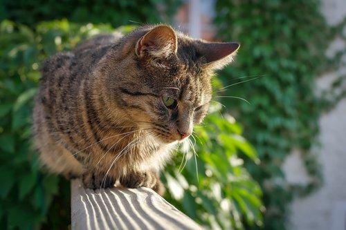 cat  purr  kitten