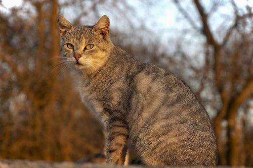 cat  animal  home