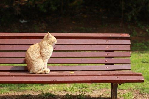cat  sun  bench