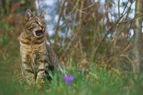 cat  garden  pet