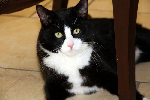 cat animal mieze