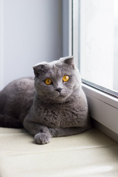 cat  window  window sill