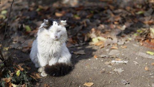 cat  pet  feline