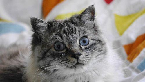 cat  pet  animal portraits