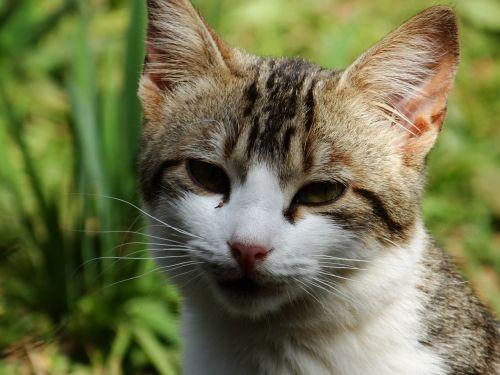 cat feline animal