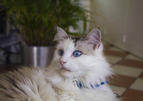 cat  eyes  feline