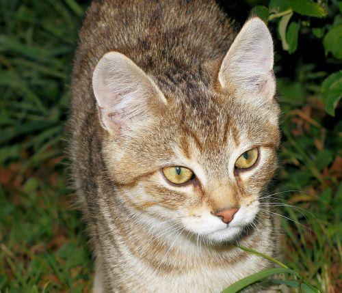 cat young animal portrait