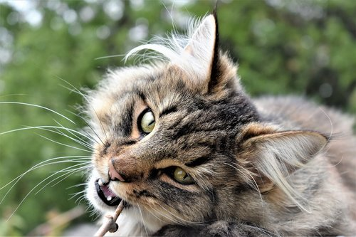 cat  animal  portrait