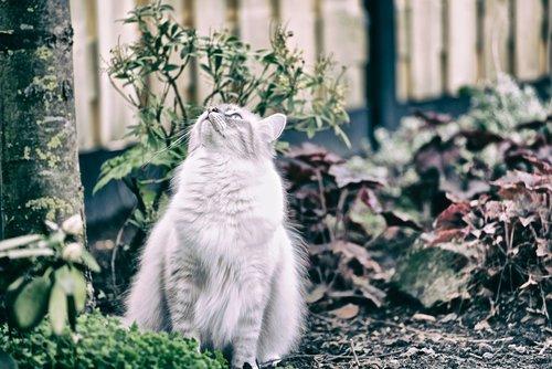 cat  pet  animals