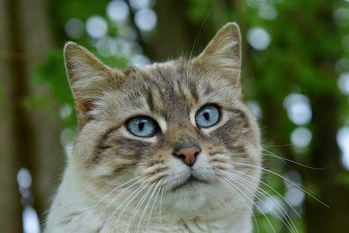 cat  pussy  portrait of cat