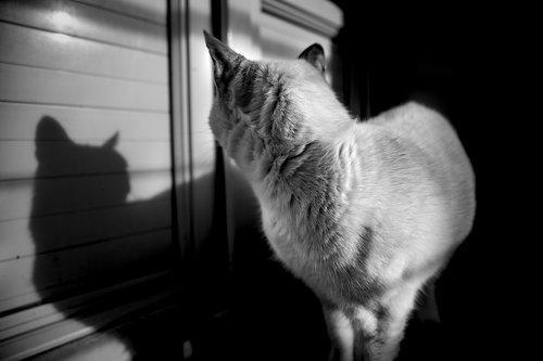 cat  fur  animals