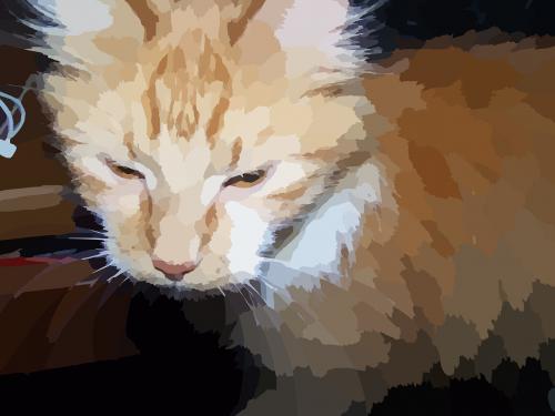 cat animal kitty