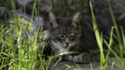 cat  eyes  pet