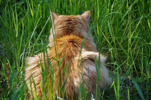 cat  redheaded  lurking