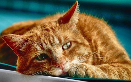 cat  eyes  portrait