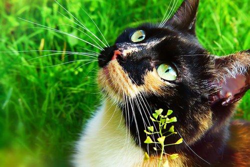 cat  female  lucy