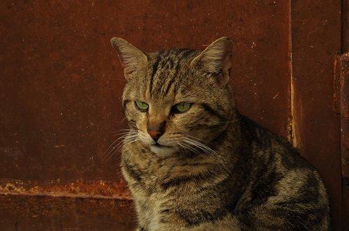 cat  stray cat  calico cat