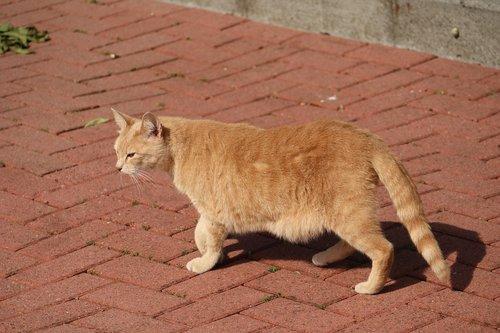 cat  female  mammal