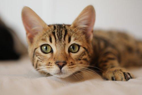 cat  funny cat  cute cat