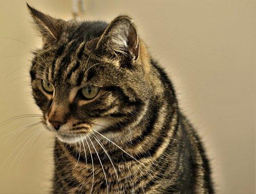 cat  starring  looking