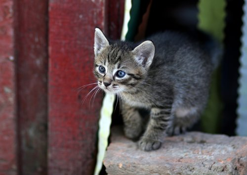 cat  small  playful