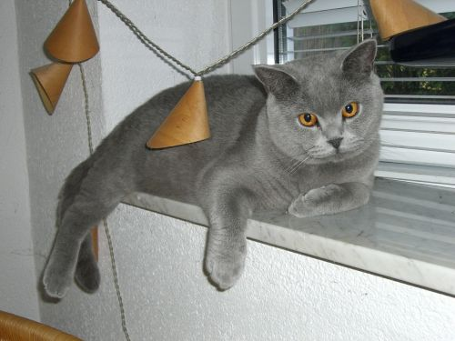 cat window sill camacho