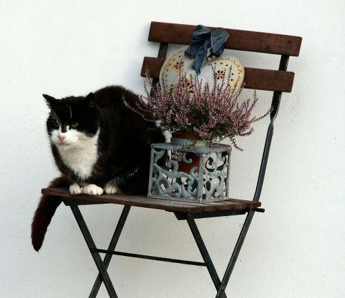 cat chair decoration