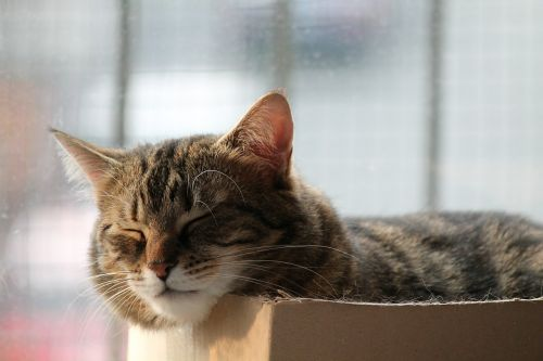 cat rest sleep