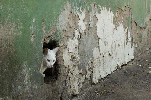 cat wall hole