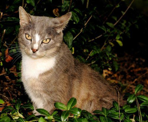 cat female head