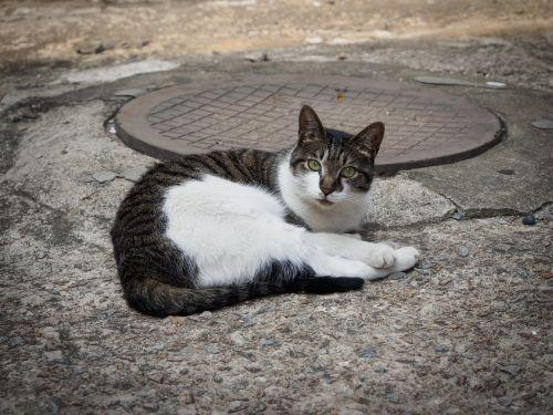 cat animal mammals