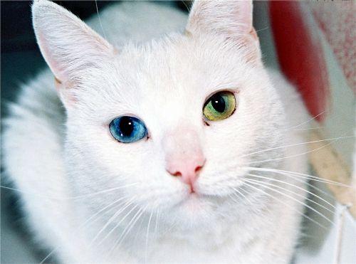 cat eyes odd