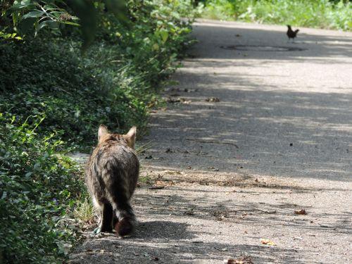 cat hunt stray