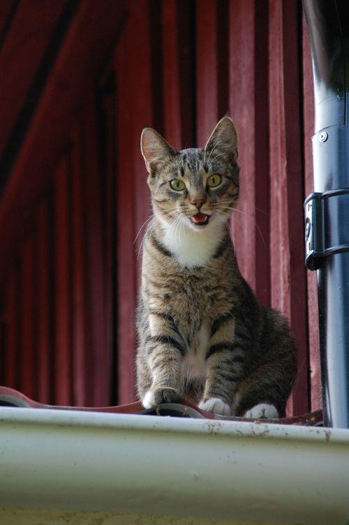 cat feline cat on roof