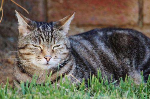 cat cozy garden