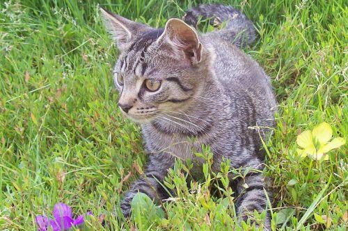 cat garden flower