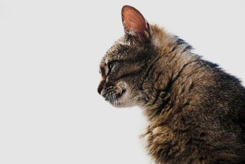 Kačių,kontūras,pobūdį