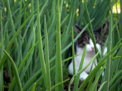 cat hidden grass