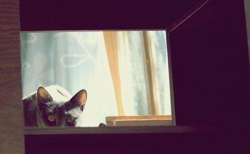 cat feline cats