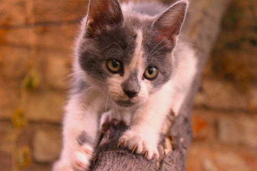 cat kitten download