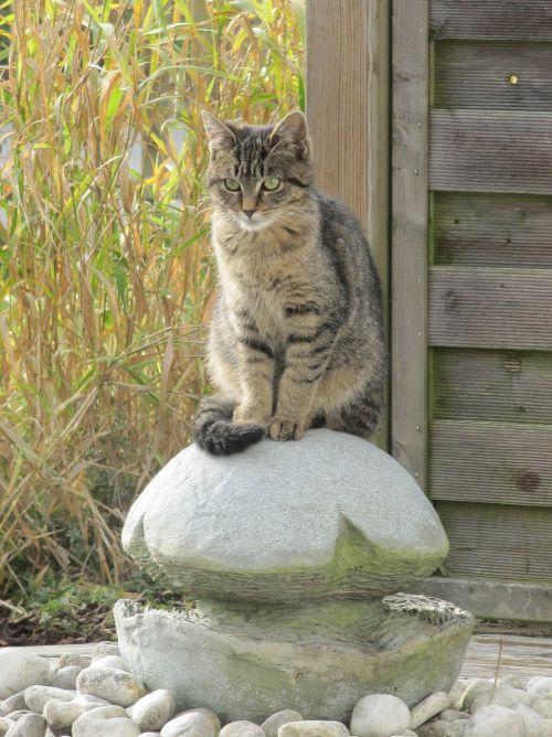 katė,gyvūnas,naminis katinas,fontanas,sodas,naminis gyvūnėlis,skumbrė