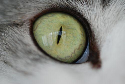 cat cat eyes cute