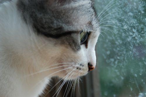 cat cute japan cat