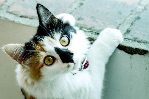 cat pussycat