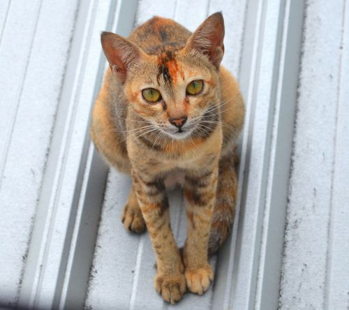 cat stare roof