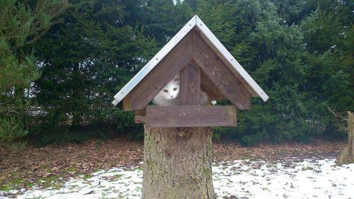 cat aviary pets