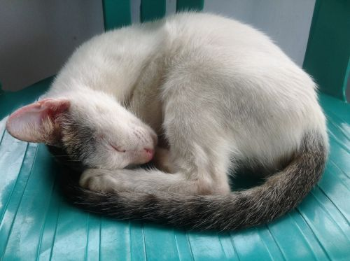 cat animal sleep